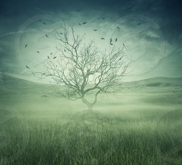 Lonely bare tree in the middle of foggy field with birds flying around. Spooky halloween screensaver photo