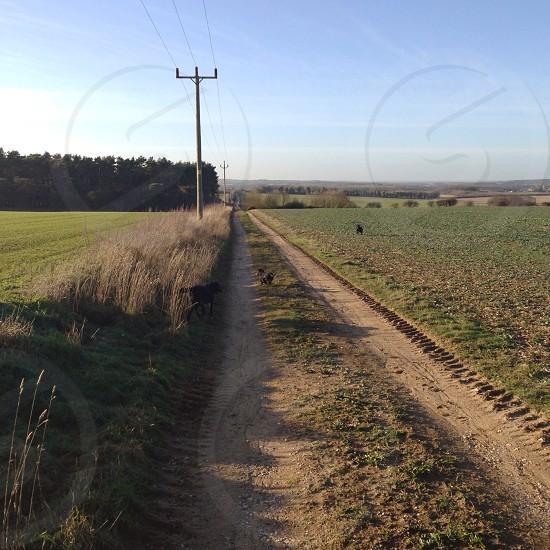 Dog walk on the farm. Norfolk UK  photo