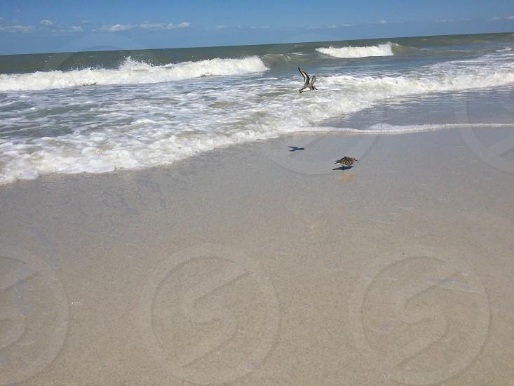 bird in the sea shore photo