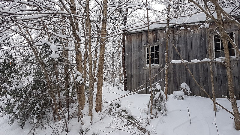 Wood shed winter photo