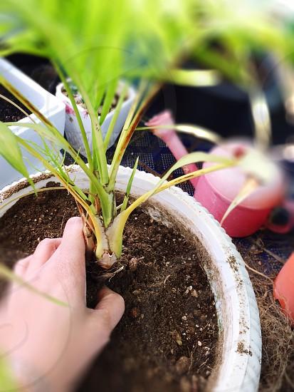 Spring Activitiesspring breakplantingplantssoilcleangreen photo