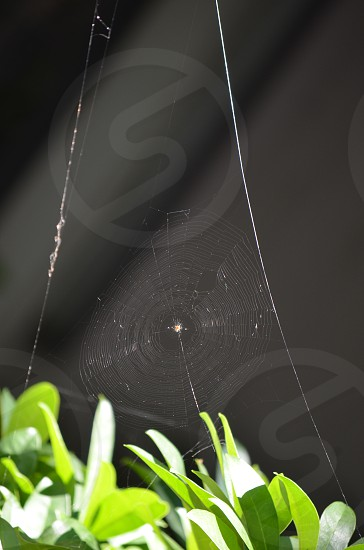 Spider web with dark grey background and green leaves photo