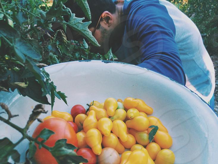 Produce garden organic farm tomato home life photo