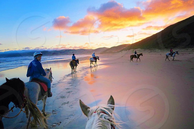 people ride on horse walking seashore during sunset photo