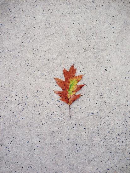 orange autumn leaf photo