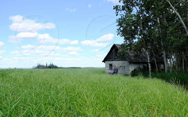 Homestead from the past. photo