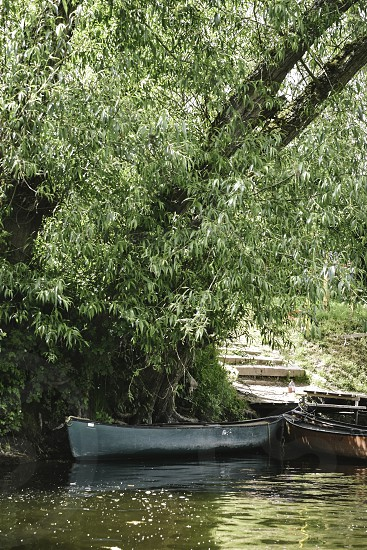 Canoe tied up under a weeping willow tree  photo