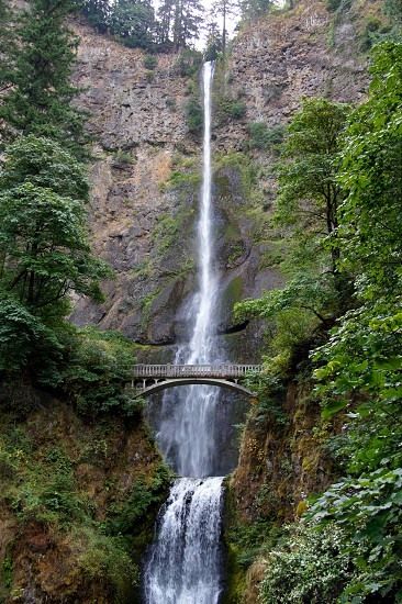 Multnomah waterfall falls bridge forest trees nature northwest Oregon water photo