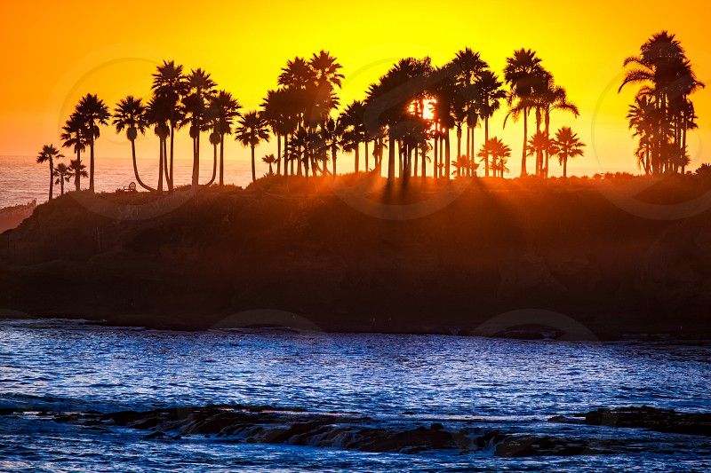 Sunset through the palm trees in Laguna Beach California photo