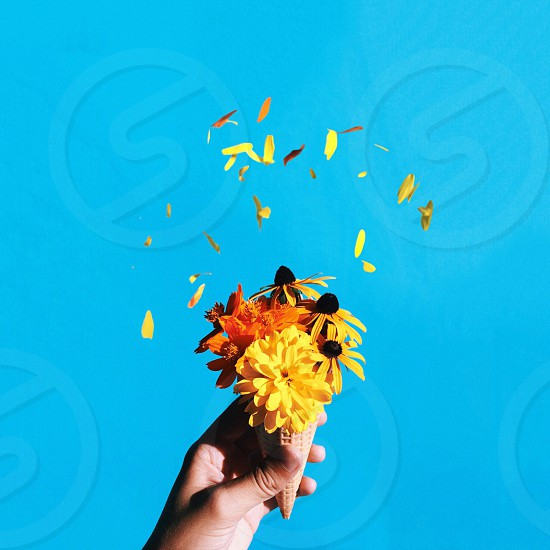 yellow and orange can flower in human hand photo