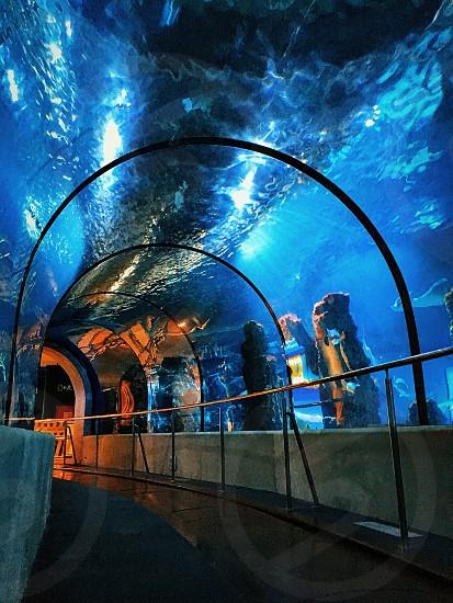 Aquarium Tunnel  photo