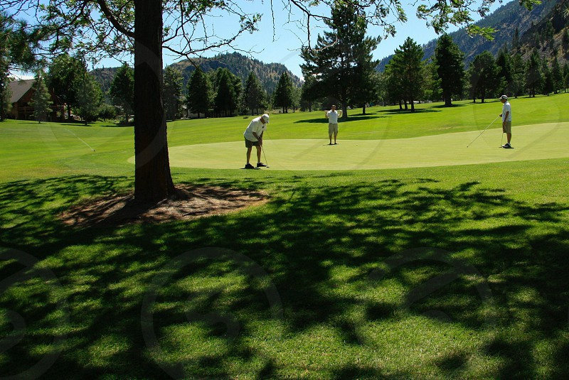 golfer about to swing putt at the golf course photo