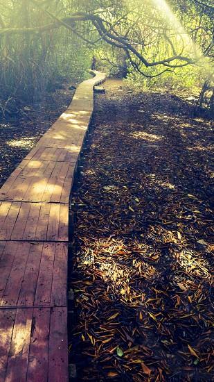 man walking on wooden pathway photo