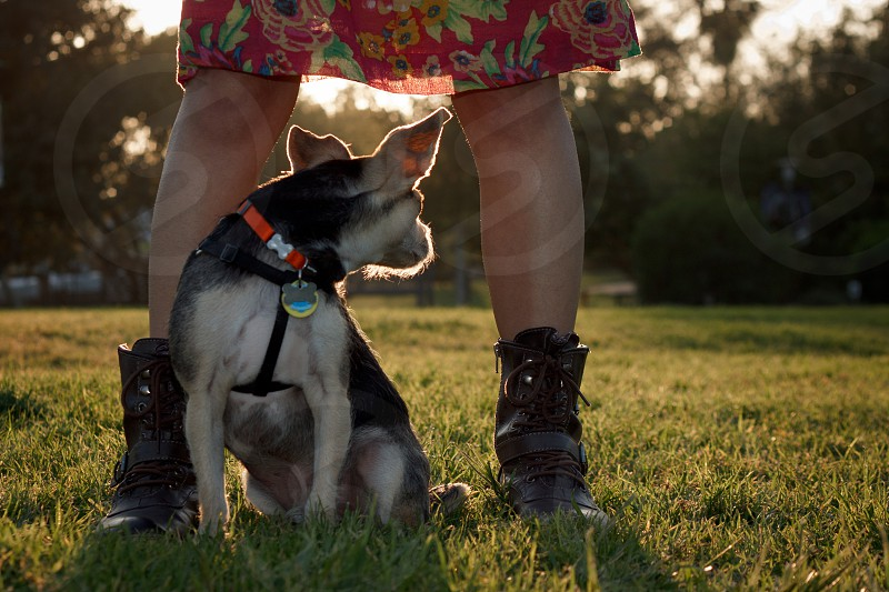 black and white dog near woman in skirt and black string boots photo