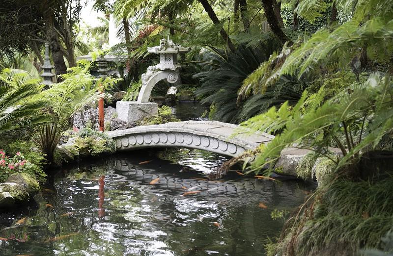 japanese garden with goldfish en green plants in madeira botanical garden photo