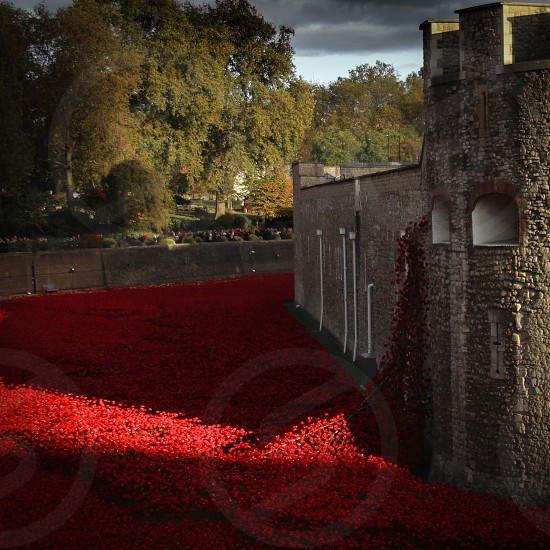 red flowers around a grey stone castle photo