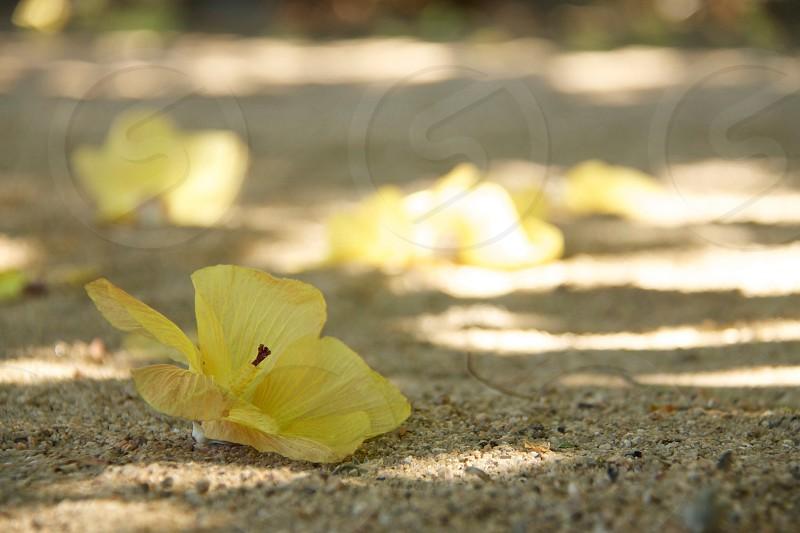 yellow leaf plant photo