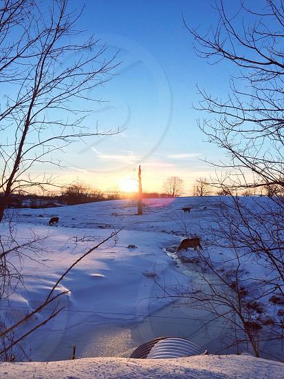snowy fiield photo