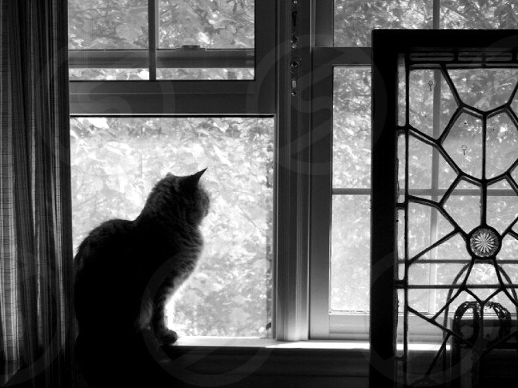 brown tabby cat looking on window photo