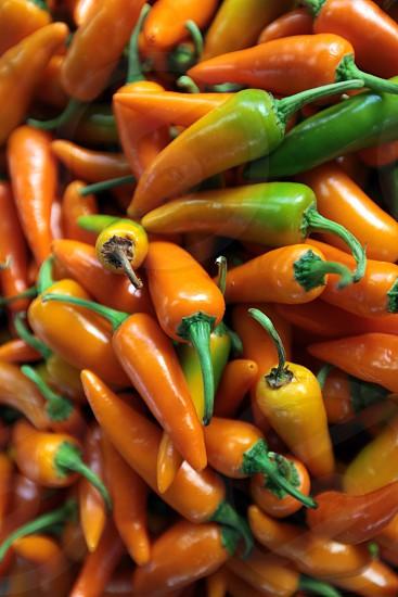 Chili auf dem Pak Khlong Markt von Bangkok der Hauptstadt von Thailand in Suedostasien. photo