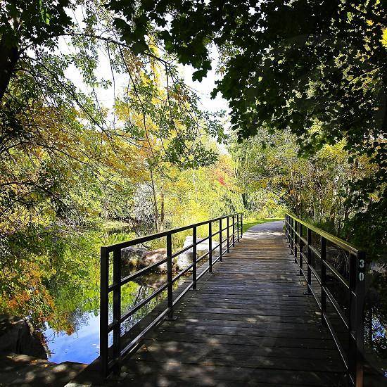 gray wooden bridge over the lake near the trees photo