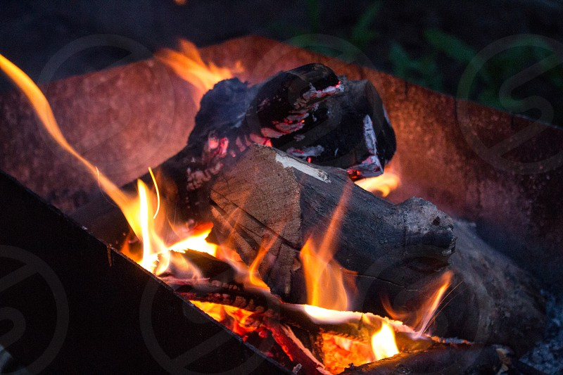 Evening forest fireplace. Ukraine. photo