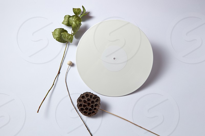 White vinyl audio record and dry branches on a light background with copy space. Retro composition. Flat lay photo