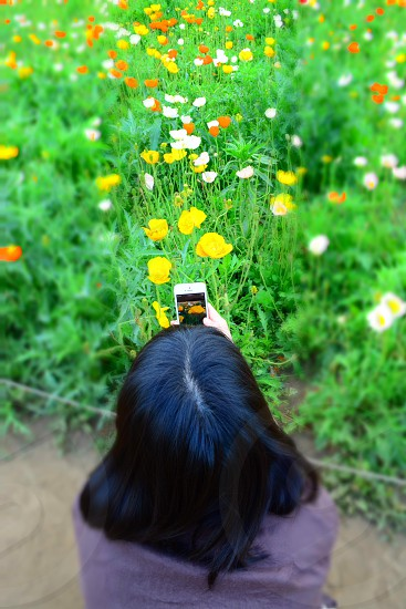 woman taking a photo of yellow and white flowers photo