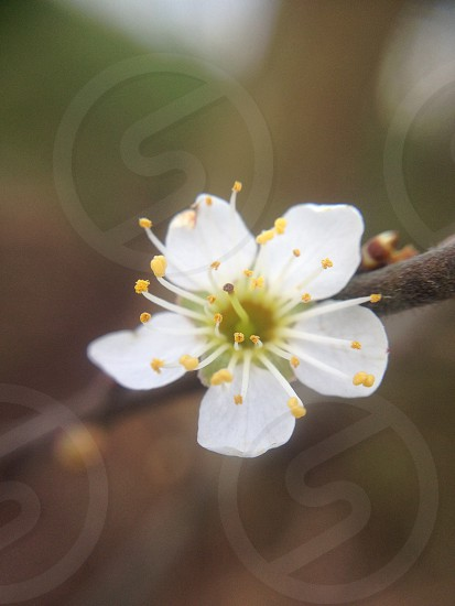 #nature #blossom #spring #naturelovers photo