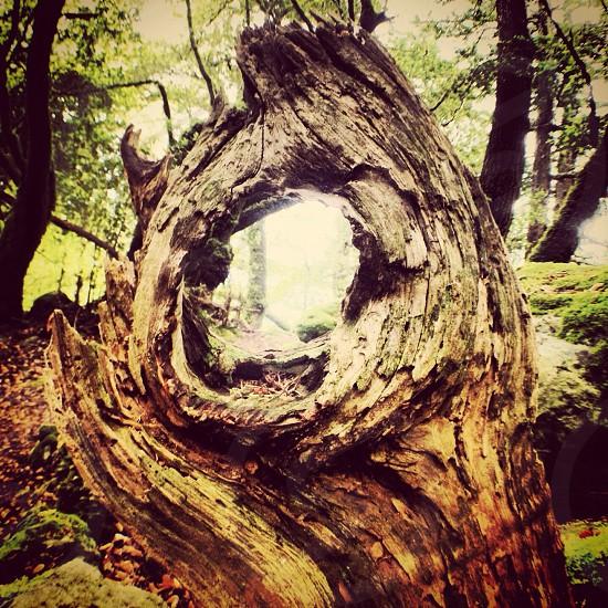 shallow focus photo of brown drift wood photo