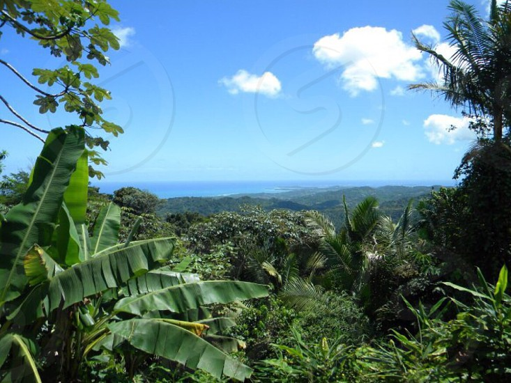 Rain forest mountain top  photo