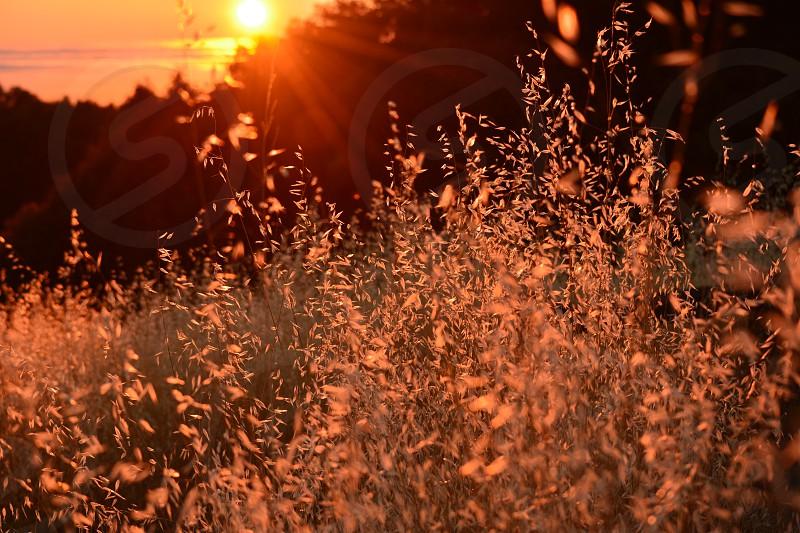 Summer sunset - La Honda CA photo
