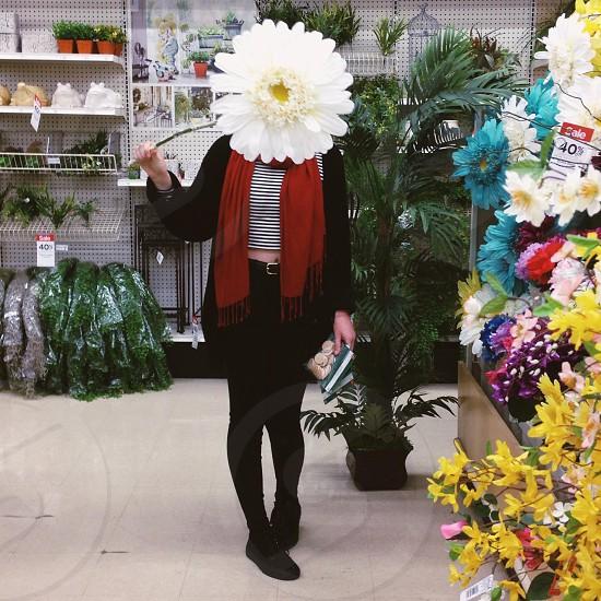 white lilies flower  photo