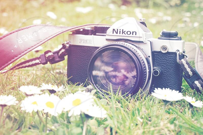 camera film analog nikon daisies spring summer light leak fm2 circle bright photo