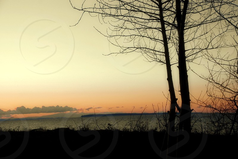 Sunset at the beach with tree Birch Bay Washington photo