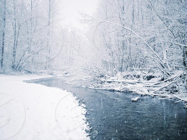 Snowy creek scene photo