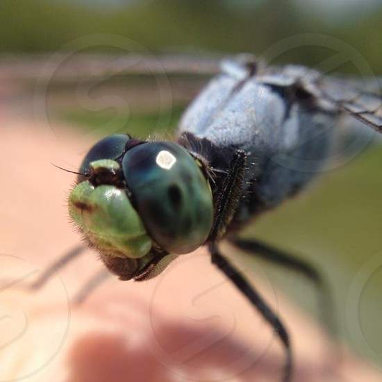 green black insect photo