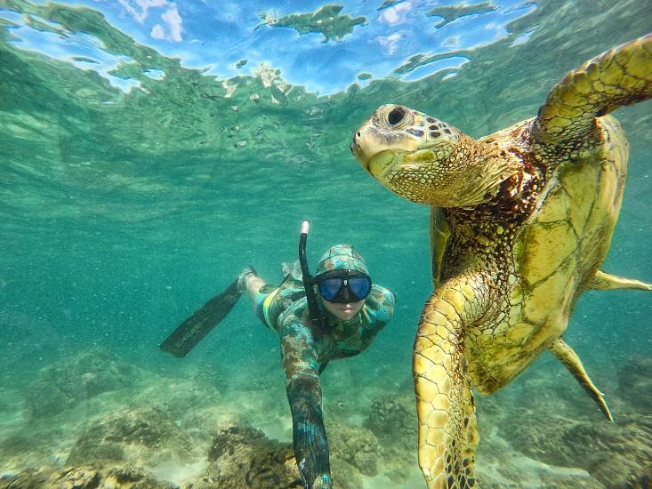 diver near brown tortoise photo