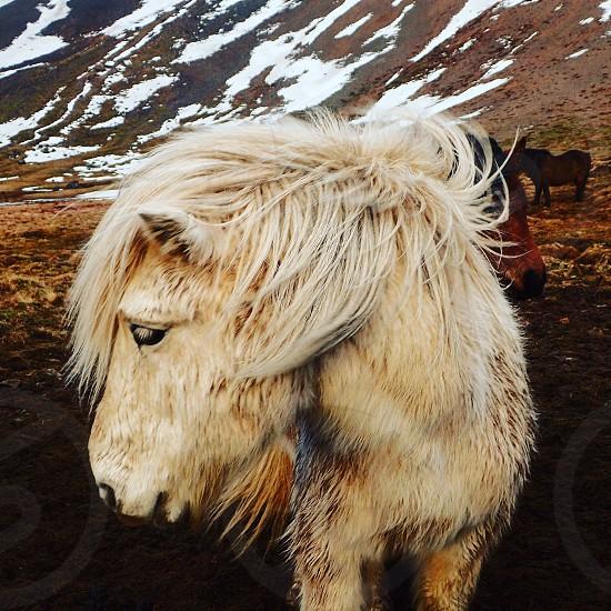 Wild horses harmony wonder closeness  photo