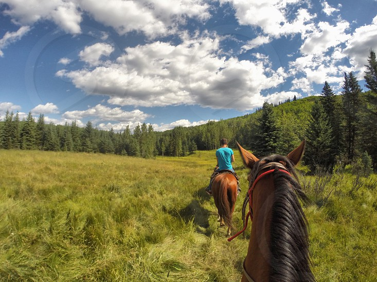 Horseback riding in Alberta Canada photo