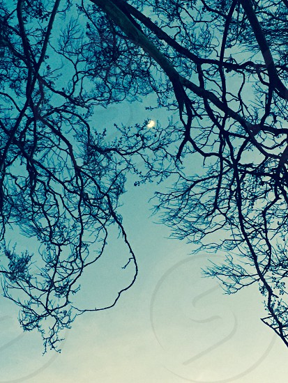 Tree branches trees moon sunrise nature sky photo