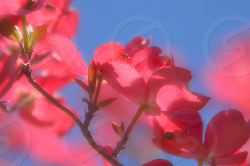 view of red petaled flower photo