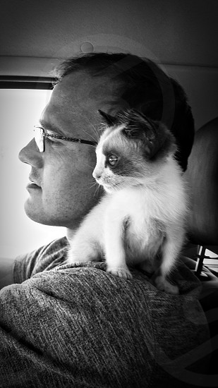 Companionship kitten cat pet black and white journey. photo