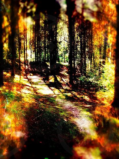 Fireland photo
