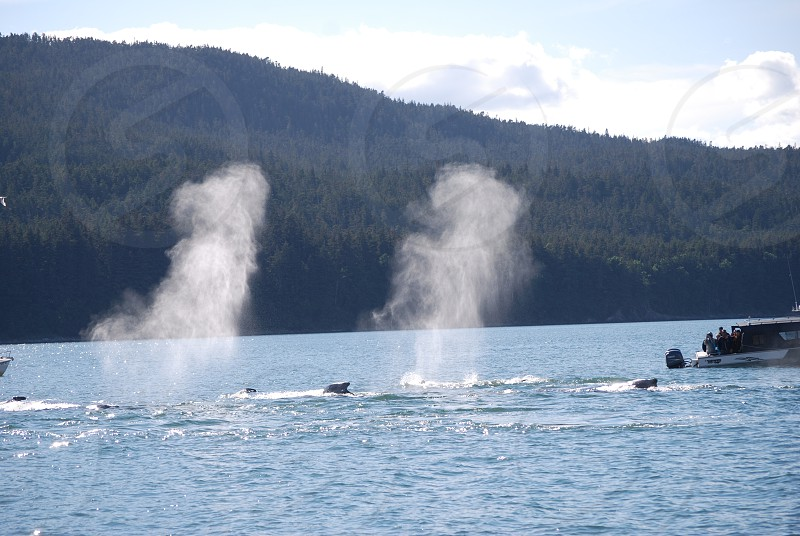 Juneau Alaksa July 2014 Humpbacks photo