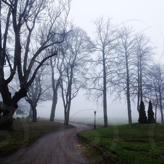foggy path photo