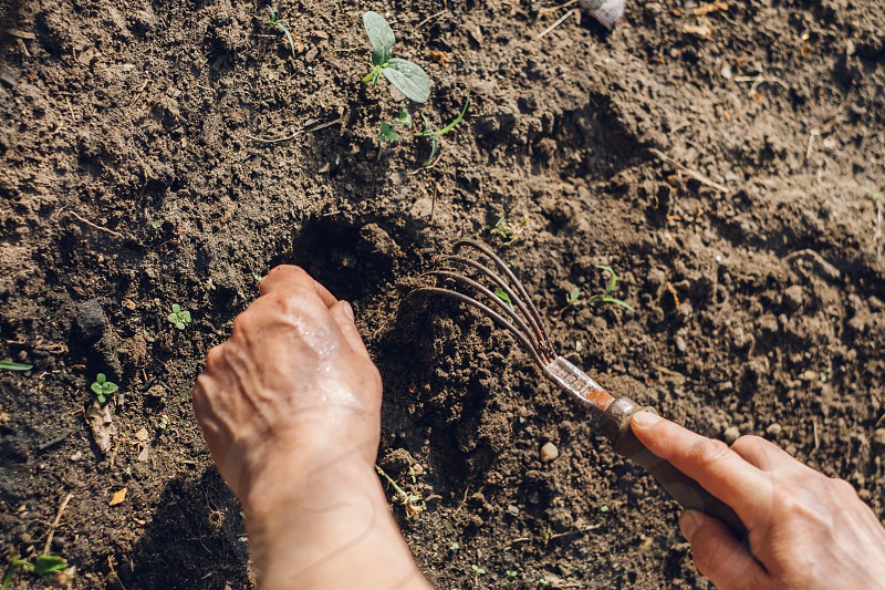 person holding brown rake near brown soil and green leaves photo
