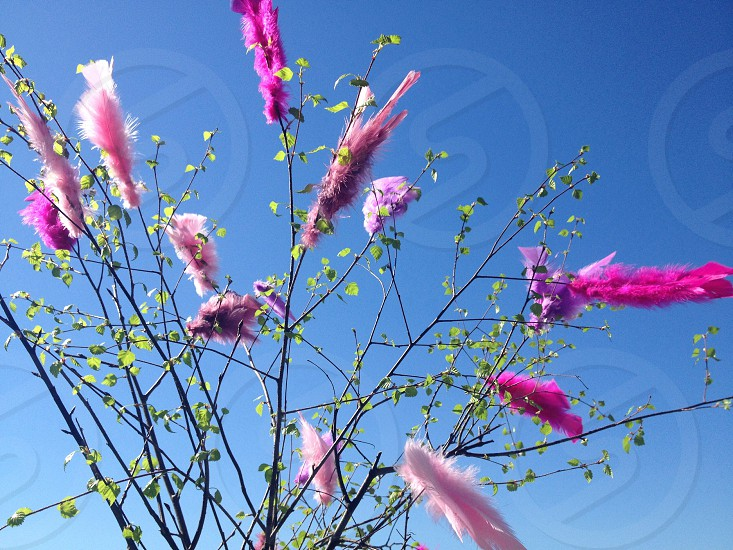 Pink feathers on a tree photo