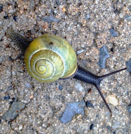 brown snail photo