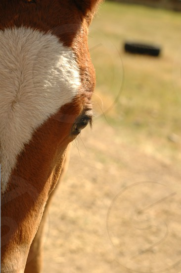 Montana Colt photo